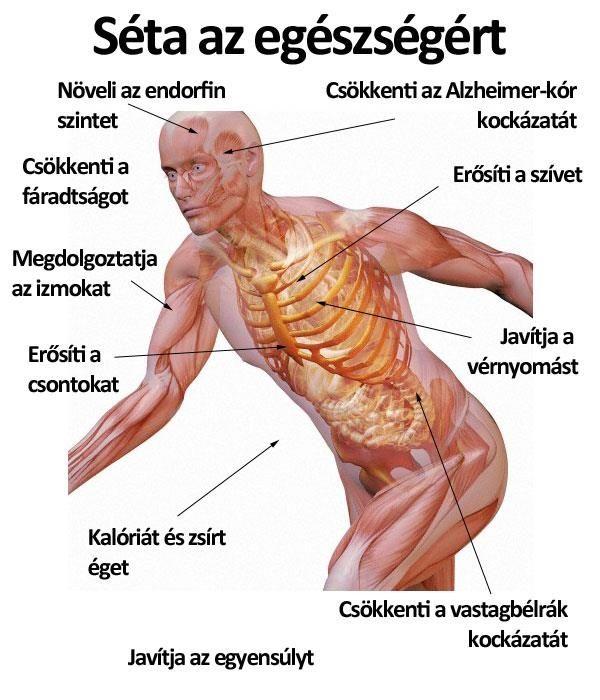 Egészség magas vérnyomás és kezelés