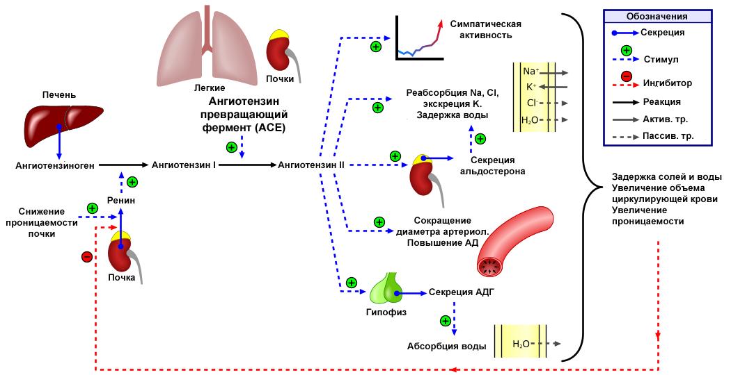 hipertónia mobilizáció in mi az nk magas vérnyomás esetén
