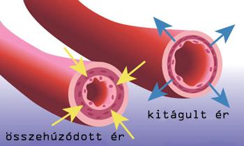 magnézium és kálium magas vérnyomás esetén