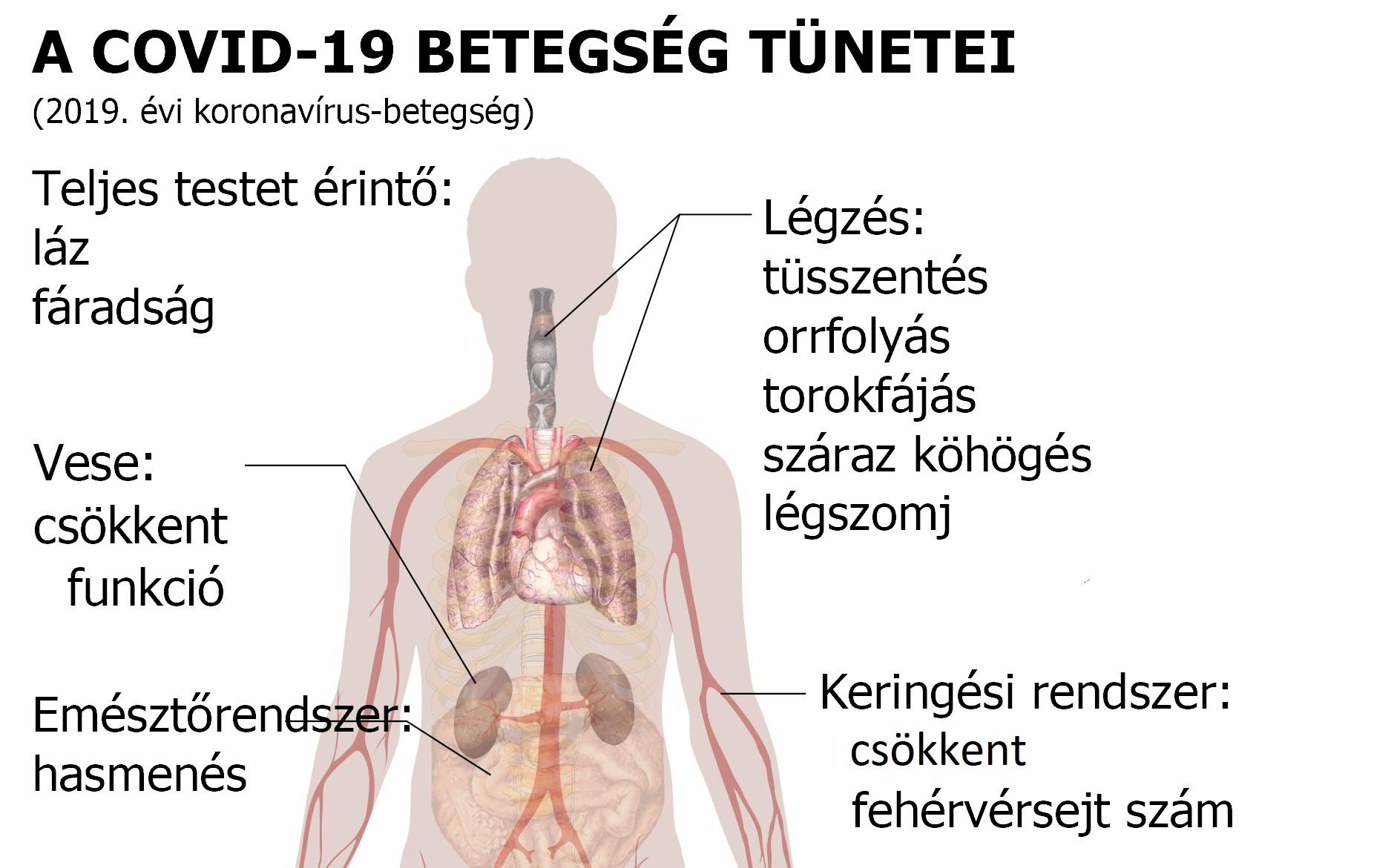 a vese magas vérnyomásának jelei lehetnek magas vérnyomás tud-e sok vizet inni