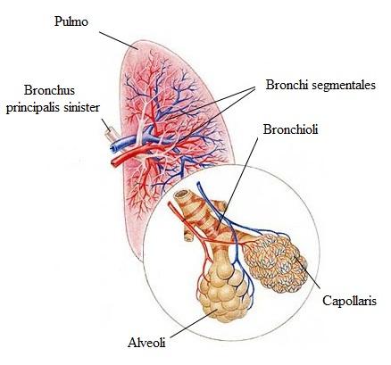 magas vérnyomású hörgőgörcs urolithiasis magas vérnyomás