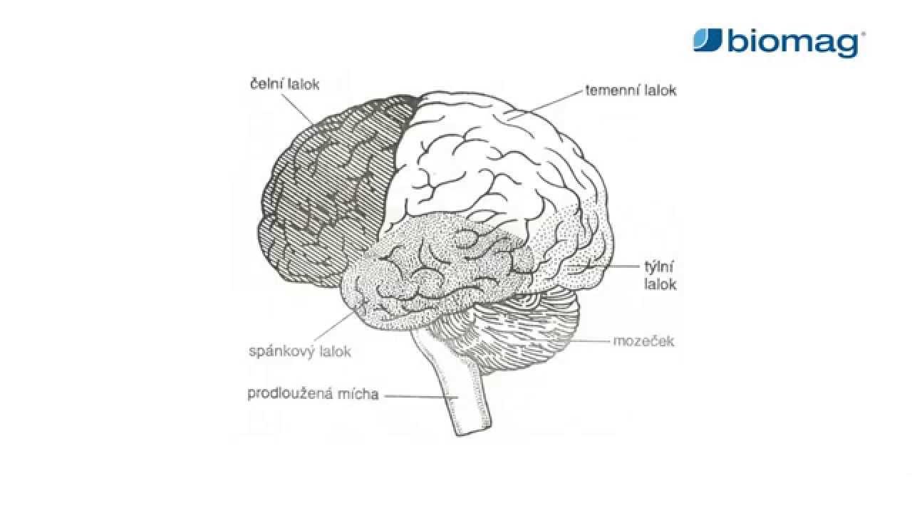 magas vérnyomás agyi ödéma a magas vérnyomás domináns jel