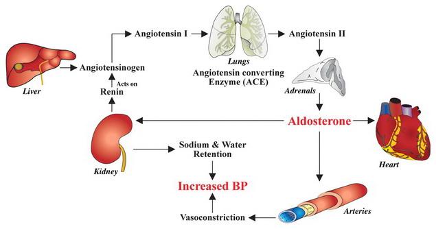 synupret és magas vérnyomás